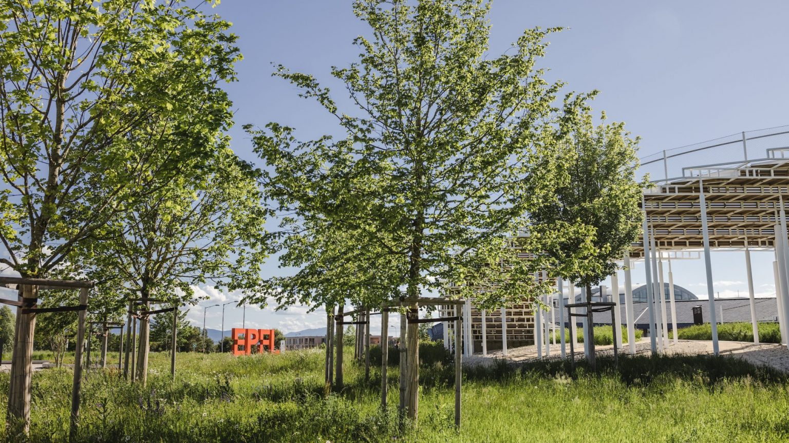 EPFL campus : view on trees and Agora by Niels Ackermann, Lundi13