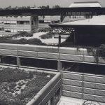 Photographie en noir et blanc d'une terrasse extérieure surélevée de l'EPFL. On observe la présence de végétation.