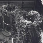 Photographie en noir et blanc de deux structures métalliques cylindriques. Elles servent de tuteurs pour des plantes grimpantes.