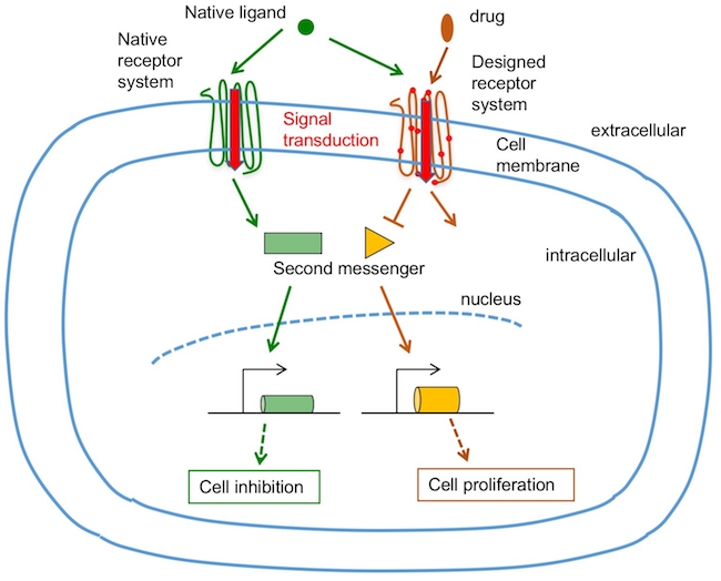 receptor_activation