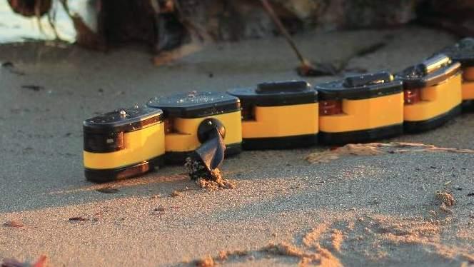Picture of Salamandra robotica amphibious robot