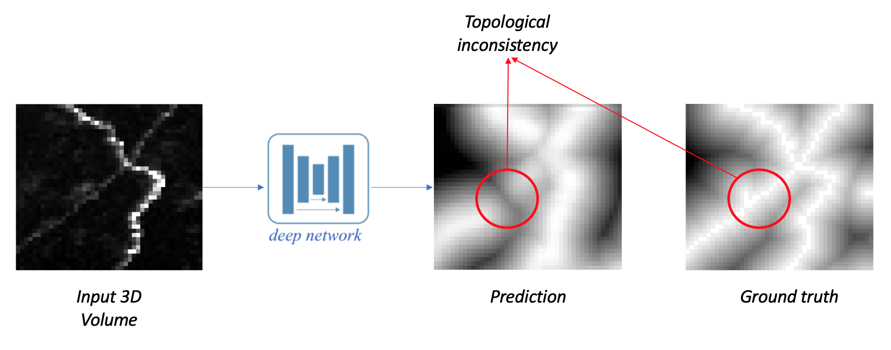Promoting Connectivity of Linear Structures in 3D Microscopy Images