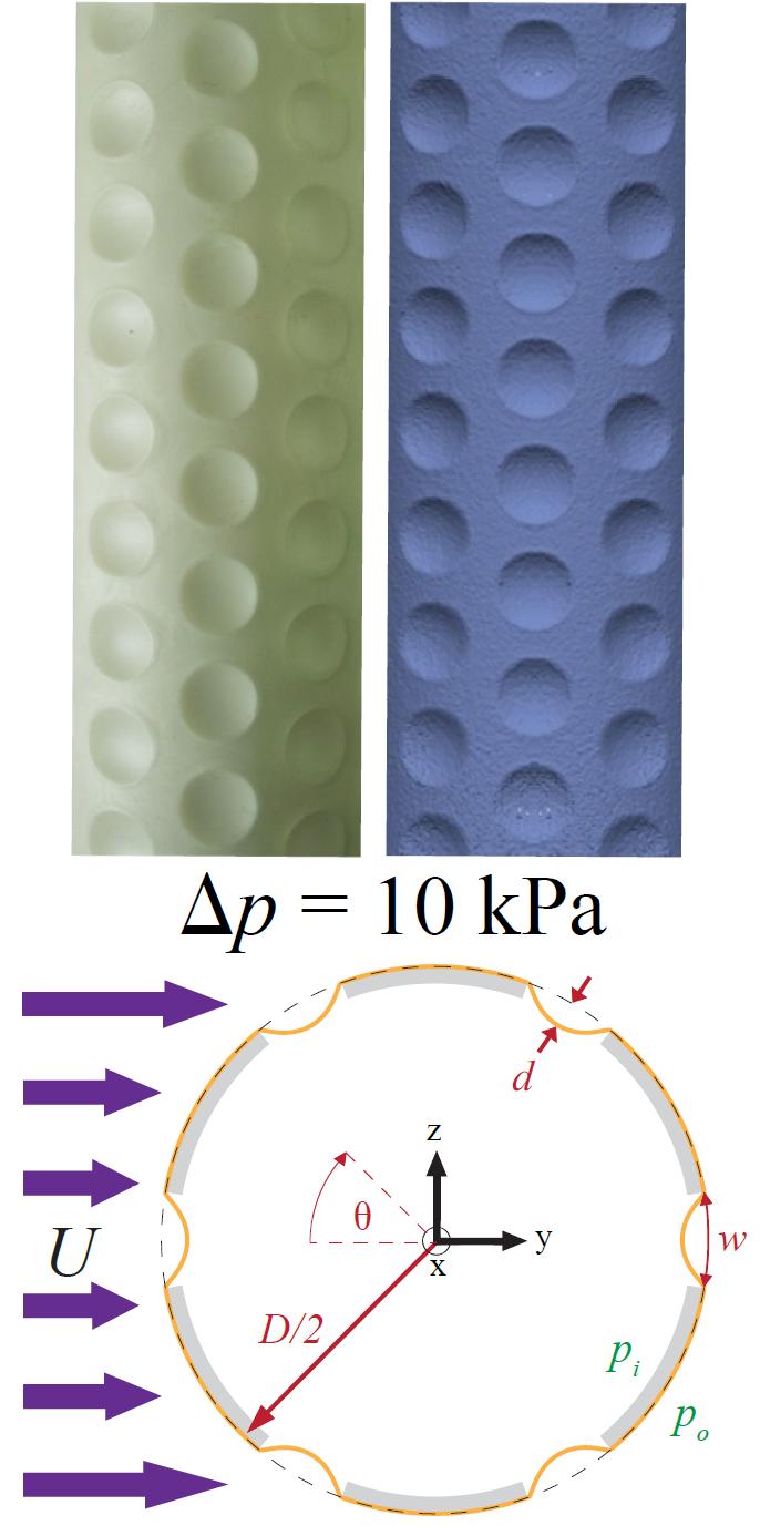 Fluids and Fluid-Structure Interaction – FLEXLAB