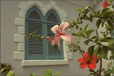 window BL2