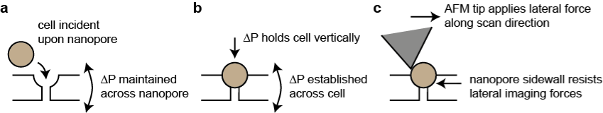 Cell Trapping Diagram