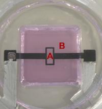 DEA-basde celle stretcher for mechanostransduction