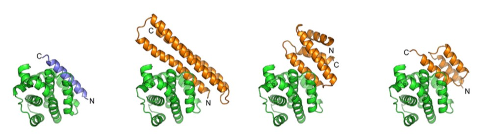 protein_binders_cropped