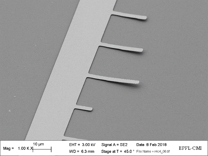 SEM image of released cantilever array