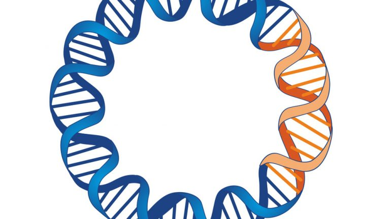 Plasmid |©Dynamic DNA Labs