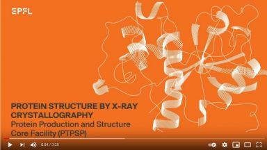 Video x-ray crystallography