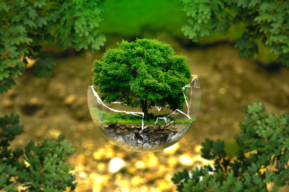 Pixabay - Environmental Protection, Environment