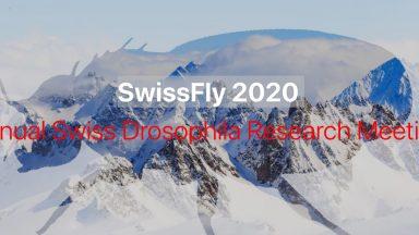 SwissFly2020
