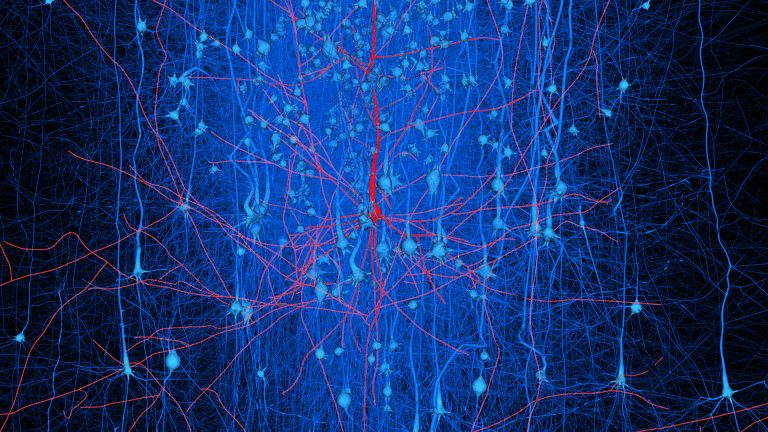 Digital reconstructed neuronal circuits - Blue Brain Project