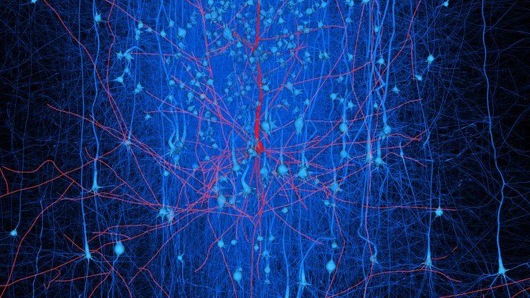 Digital reconstructed neuronal circuits - Blue Brain Project